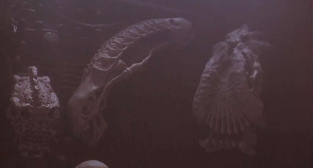 predator 2 alien skull