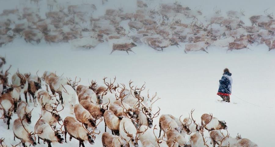 Reindeer Husbandry Siberia